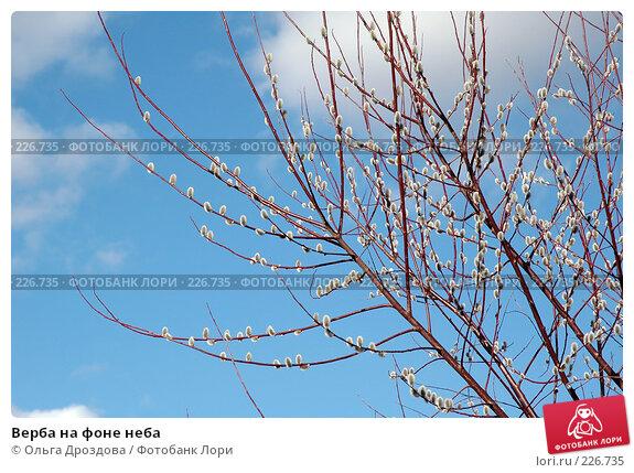 Верба на фоне неба, фото № 226735, снято 12 апреля 2005 г. (c) Ольга Дроздова / Фотобанк Лори