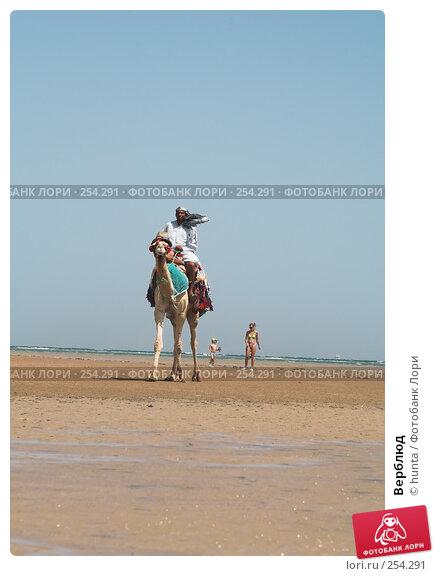 Верблюд, фото № 254291, снято 6 сентября 2007 г. (c) hunta / Фотобанк Лори