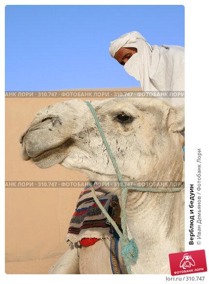Купить «Верблюд и бедуин», фото № 310747, снято 14 августа 2007 г. (c) Иван Демьянов / Фотобанк Лори