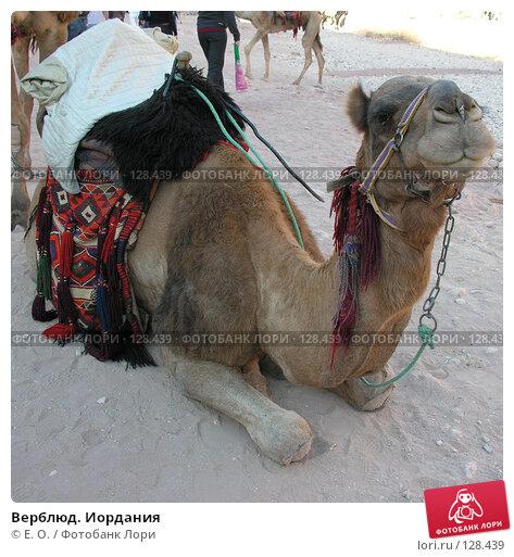 Верблюд. Иордания, фото № 128439, снято 25 ноября 2007 г. (c) Екатерина Овсянникова / Фотобанк Лори