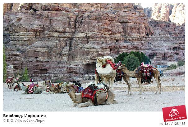 Верблюд. Иордания, фото № 128455, снято 25 ноября 2007 г. (c) Екатерина Овсянникова / Фотобанк Лори
