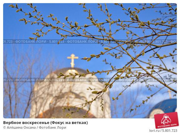 Купить «Вербное воскресенье (Фокус на ветках)», эксклюзивное фото № 5801723, снято 12 апреля 2014 г. (c) Алёшина Оксана / Фотобанк Лори
