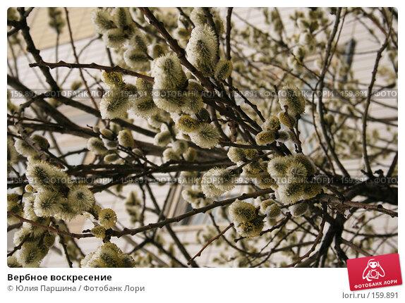 Купить «Вербное воскресение», фото № 159891, снято 7 апреля 2007 г. (c) Юлия Паршина / Фотобанк Лори