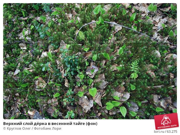 Верхний слой дёрна в весенней тайге (фон), фото № 63275, снято 6 июня 2007 г. (c) Круглов Олег / Фотобанк Лори