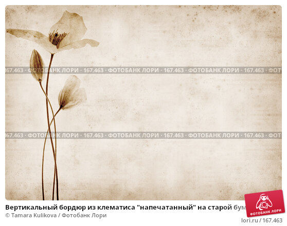 """Вертикальный бордюр из клематиса """"напечатанный"""" на старой бумаге, иллюстрация № 167463 (c) Tamara Kulikova / Фотобанк Лори"""