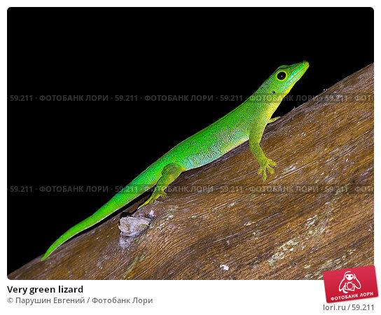 Very green lizard, фото № 59211, снято 23 июля 2017 г. (c) Парушин Евгений / Фотобанк Лори