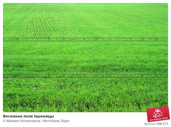 Весеннее поле пшеницы, фото № 306511, снято 26 мая 2008 г. (c) Михаил Коханчиков / Фотобанк Лори