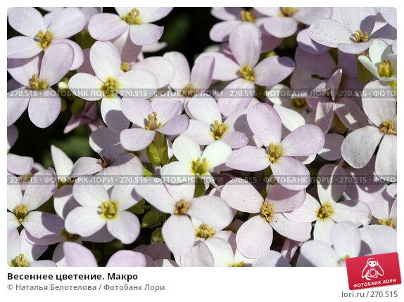 Весеннее цветение. Макро, фото № 270515, снято 3 мая 2008 г. (c) Наталья Белотелова / Фотобанк Лори