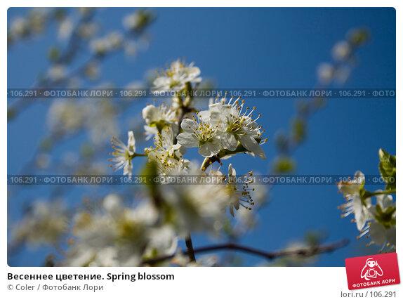 Весеннее цветение. Spring blossom, фото № 106291, снято 9 мая 2007 г. (c) Coler / Фотобанк Лори