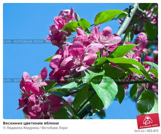 Весеннее цветение яблони, фото № 303415, снято 25 апреля 2008 г. (c) Людмила Жмурина / Фотобанк Лори