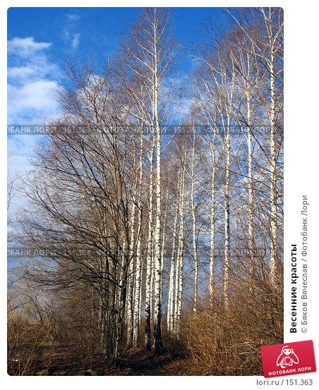Купить «Весенние красоты», фото № 151363, снято 8 апреля 2007 г. (c) Бяков Вячеслав / Фотобанк Лори