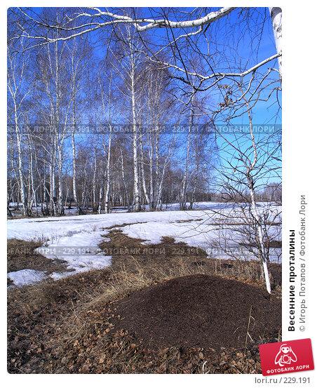 Весенние проталины, фото № 229191, снято 22 октября 2006 г. (c) Игорь Потапов / Фотобанк Лори
