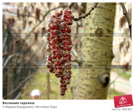 Купить «Весенние сережки», фото № 300451, снято 5 апреля 2008 г. (c) Марина Бандуркина / Фотобанк Лори
