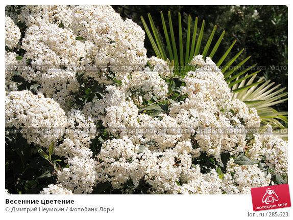 Купить «Весенние цветение», эксклюзивное фото № 285623, снято 21 апреля 2008 г. (c) Дмитрий Неумоин / Фотобанк Лори