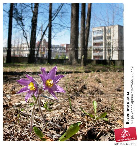 Весенние цветы, фото № 66115, снято 7 мая 2007 г. (c) Ермилова Арина / Фотобанк Лори