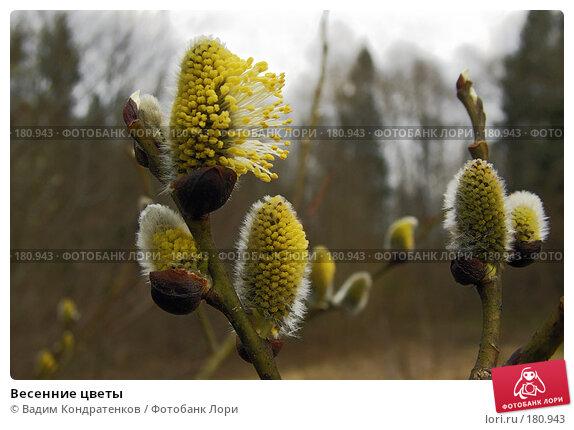 Весенние цветы, фото № 180943, снято 29 мая 2017 г. (c) Вадим Кондратенков / Фотобанк Лори