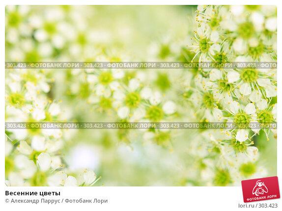 Весенние цветы, фото № 303423, снято 21 апреля 2008 г. (c) Александр Паррус / Фотобанк Лори