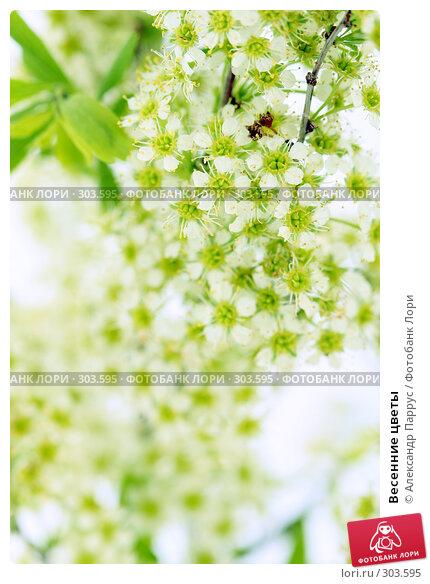 Весенние цветы, фото № 303595, снято 21 апреля 2008 г. (c) Александр Паррус / Фотобанк Лори