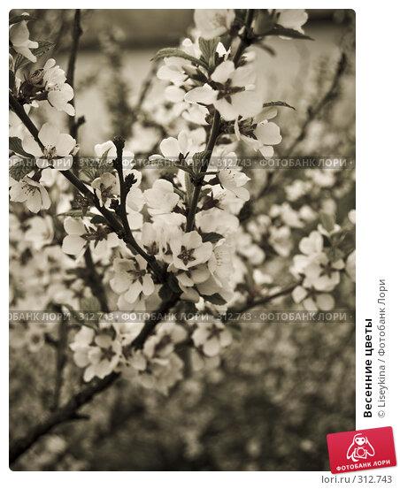 Весенние цветы, фото № 312743, снято 2 мая 2008 г. (c) Liseykina / Фотобанк Лори