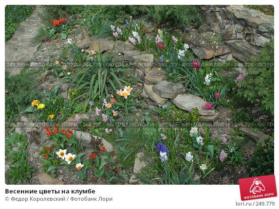 Весенние цветы на клумбе, фото № 249779, снято 12 апреля 2008 г. (c) Федор Королевский / Фотобанк Лори