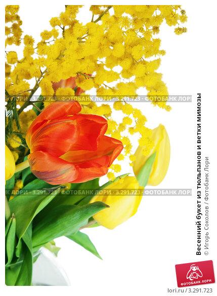 Купить «Весенний букет из тюльпанов и ветки мимозы», фото № 3291723, снято 7 марта 2011 г. (c) Игорь Соколов / Фотобанк Лори