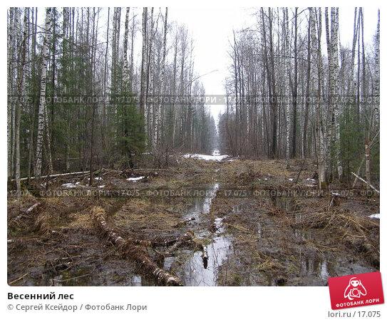 Весенний лес, фото № 17075, снято 22 апреля 2006 г. (c) Сергей Ксейдор / Фотобанк Лори