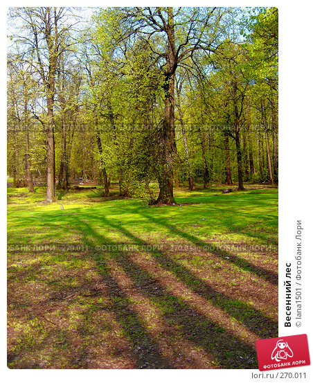 Весенний лес, эксклюзивное фото № 270011, снято 2 мая 2008 г. (c) lana1501 / Фотобанк Лори