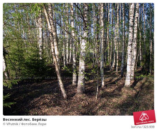 Весенний лес. Берёзы, фото № 323939, снято 25 октября 2016 г. (c) VPutnik / Фотобанк Лори