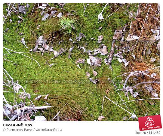 Весенний мох, фото № 111459, снято 30 апреля 2007 г. (c) Parmenov Pavel / Фотобанк Лори