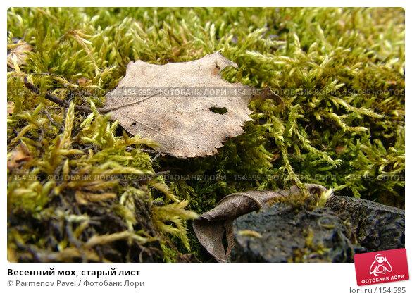 Весенний мох, старый лист, фото № 154595, снято 30 апреля 2007 г. (c) Parmenov Pavel / Фотобанк Лори