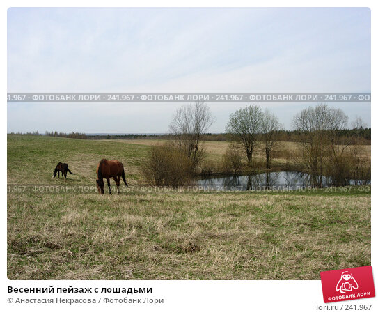 Весенний пейзаж с лошадьми, фото № 241967, снято 7 мая 2007 г. (c) Анастасия Некрасова / Фотобанк Лори