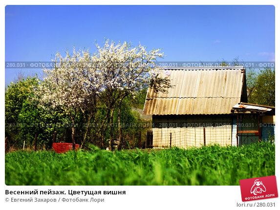 Весенний пейзаж. Цветущая вишня, фото № 280031, снято 2 мая 2008 г. (c) Евгений Захаров / Фотобанк Лори