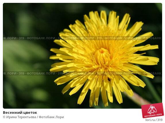 Весенний цветок, эксклюзивное фото № 319, снято 15 мая 2005 г. (c) Ирина Терентьева / Фотобанк Лори