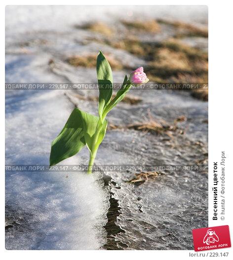 Весенний цветок, фото № 229147, снято 8 марта 2008 г. (c) hunta / Фотобанк Лори