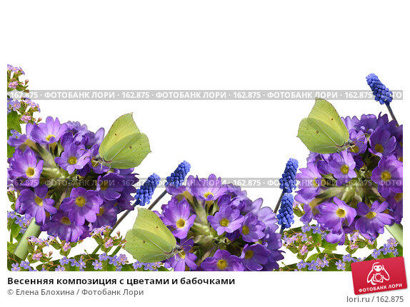 Весенняя композиция с цветами и бабочками, фото № 162875, снято 20 июля 2017 г. (c) Елена Блохина / Фотобанк Лори