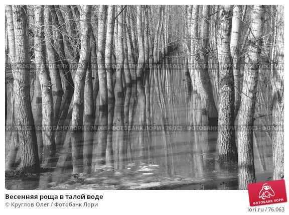 Весенняя роща в талой воде, фото № 76063, снято 10 апреля 2007 г. (c) Круглов Олег / Фотобанк Лори