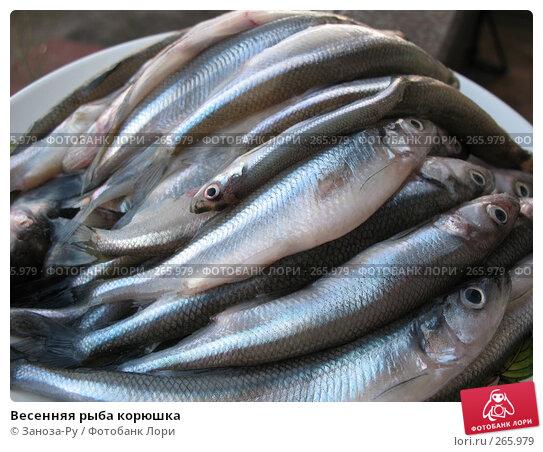 Весенняя рыба корюшка, фото № 265979, снято 22 апреля 2008 г. (c) Заноза-Ру / Фотобанк Лори
