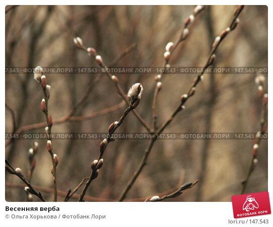 Весенняя верба, фото № 147543, снято 22 марта 2007 г. (c) Ольга Хорькова / Фотобанк Лори
