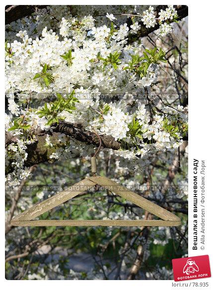 Купить «Вешалка в вишневом саду», фото № 78935, снято 25 апреля 2007 г. (c) Alla Andersen / Фотобанк Лори