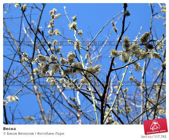 Весна, фото № 117743, снято 19 января 2017 г. (c) Бяков Вячеслав / Фотобанк Лори