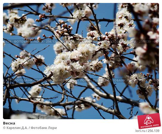 Купить «Весна», фото № 256139, снято 13 апреля 2008 г. (c) Карелин Д.А. / Фотобанк Лори