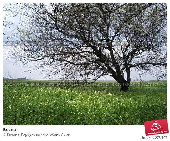Весна, фото № 273107, снято 30 апреля 2007 г. (c) Галина  Горбунова / Фотобанк Лори