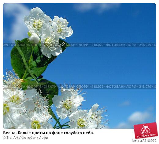 Купить «Весна. Белые цветы на фоне голубого неба.», фото № 218079, снято 19 апреля 2018 г. (c) ElenArt / Фотобанк Лори