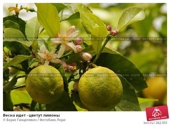 Весна идет - цветут лимоны, фото № 262931, снято 29 марта 2008 г. (c) Борис Ганцелевич / Фотобанк Лори