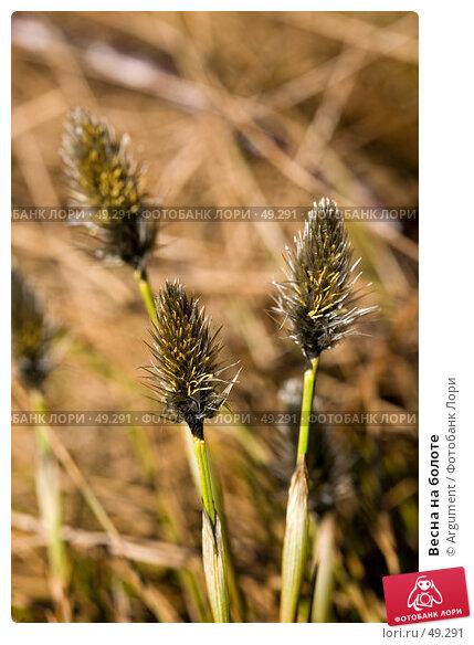 Весна на болоте, фото № 49291, снято 1 апреля 2007 г. (c) Argument / Фотобанк Лори