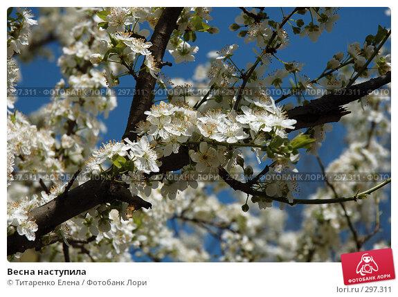 Весна наступила, фото № 297311, снято 8 апреля 2008 г. (c) Титаренко Елена / Фотобанк Лори