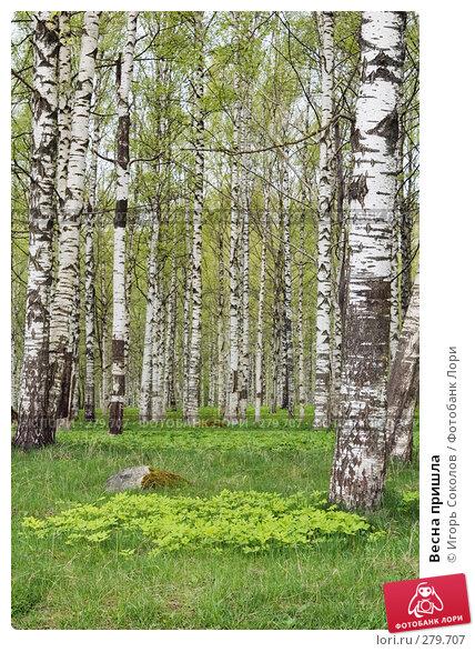 Весна пришла, фото № 279707, снято 9 мая 2008 г. (c) Игорь Соколов / Фотобанк Лори