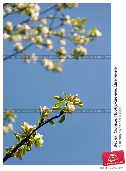 Весна. Солнце. Пробуждение. Цветение, фото № 269395, снято 29 апреля 2008 г. (c) urchin / Фотобанк Лори