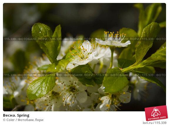 Весна. Spring, фото № 115339, снято 9 мая 2007 г. (c) Coler / Фотобанк Лори