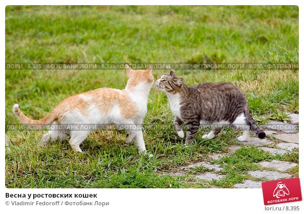 Весна у ростовских кошек, фото № 8395, снято 10 августа 2006 г. (c) Vladimir Fedoroff / Фотобанк Лори